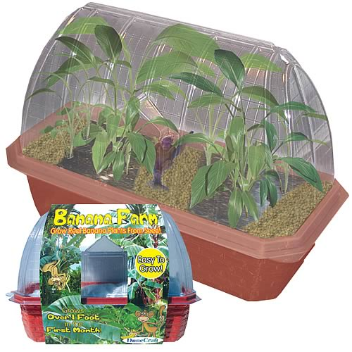 Banana Farm Windowsill Garden