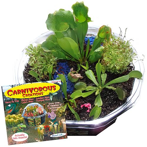 Carnivorous Creations Terrarium Kit