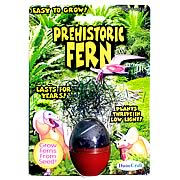 Prehistoric Fern Micro Terrarium