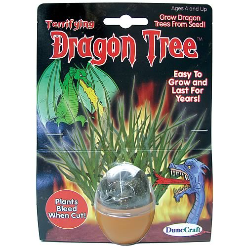 Dragon Tree Terrarium Kit