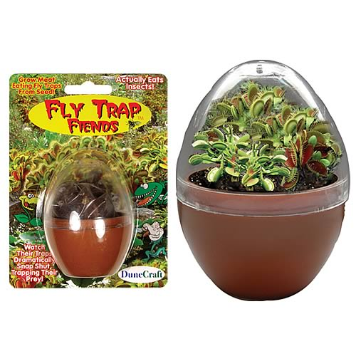 Fly Trap Fiends Micro Terrarium