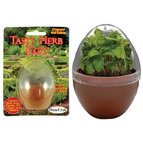 Tasty Herb Egg Micro Terrarium