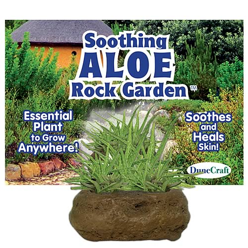 Soothing Aloe Rock Garden