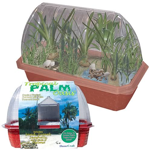Tropical Palm Oasis Windowsill Garden