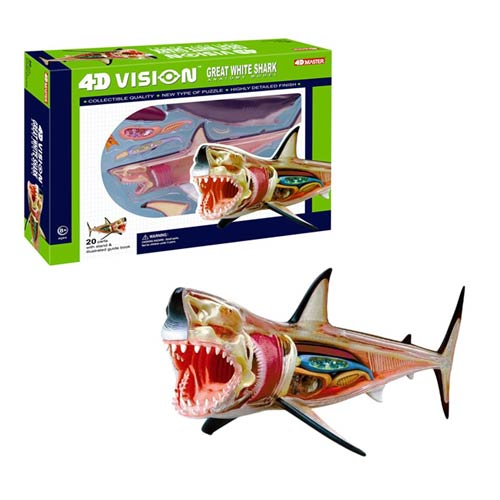 Great White Shark 4-D Vision Anatomy Model Kit