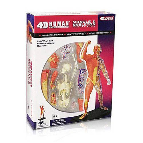 Human Muscle Skeleton 4-D Vision Anatomy Model Kit
