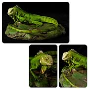 Cold-Blooded Collectibles Green Iguana Statue Sculpture
