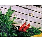 Wizard of Oz Wicked Witch of the East Canvas Print