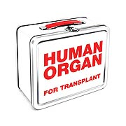 Zombie Human Organ Lunch Box! Vital for your survival. With the dawn of a zombie apocalypse nearly always nigh, your Zombie Human Organ Lunch Box will become ever the more vital! A comfortably spacey tin lunch box at 7 3/4-inches wide x 6 3/4-inches tall x 4 1/4-inches long, it's big enough to lug a few healthy organs around but small enough to keep it relatively light as you escape the hungry, undead hordes. Invest in your own survival with the Zombie Human Organ Lunch Box!