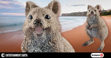 We Love the Quokka!